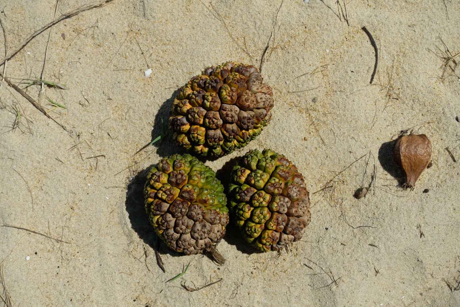 Pseudo-Ananas