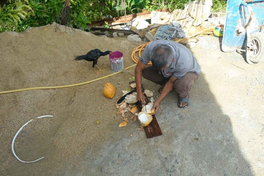 Schälen und öffnen der Kokosnuss