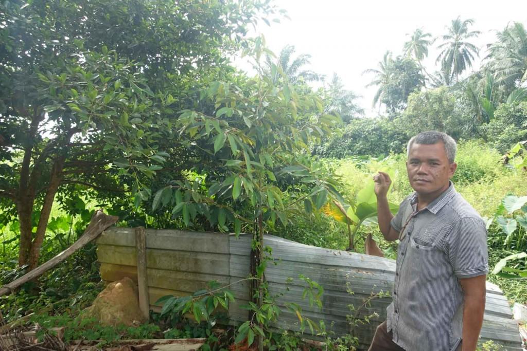 Größere Durian-Pflanze