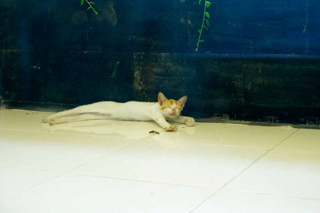 Sich räkelnde Katze