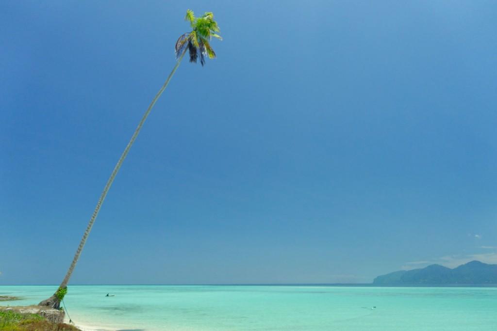 Einsame Palme am türkisen Wasser