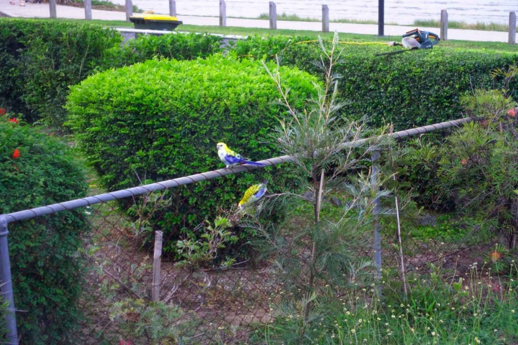 Bunte Vögelchen auf dem Zaun