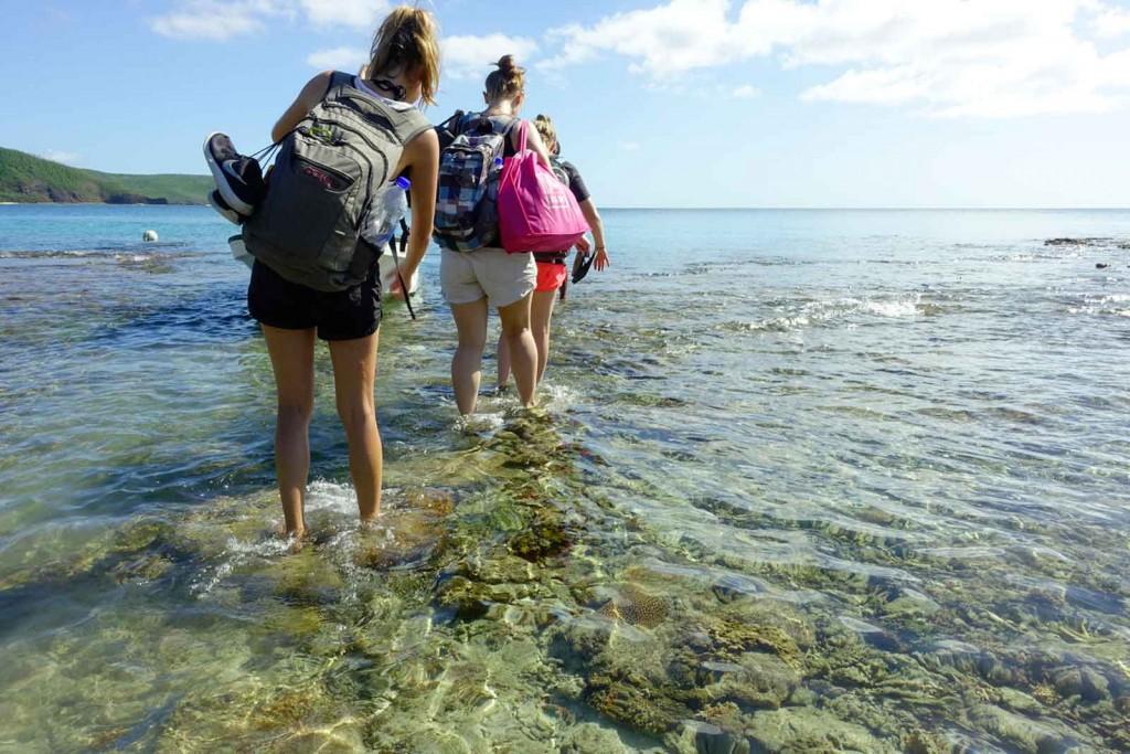 Watscheln übers Korallendach