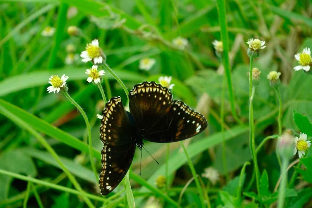 Schmetterling auf dem Wanderweg